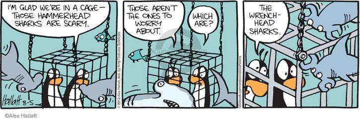 Im glad were in a cage - those hammerhead sharks are scary. Those arent the ones to worry about. Which are? The wrenchhead sharks.