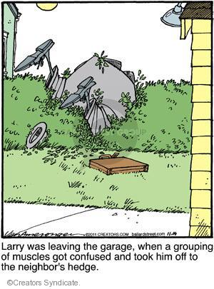 Larry was leaving the garage, when a grouping of muscles got confused and took him off to the neighbors hedge.