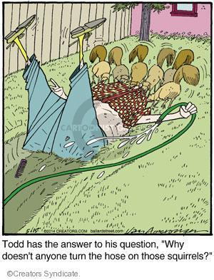 """Todd has the answer to his question, """"Why doesn't anyone turn the hose on those squirrels?"""""""