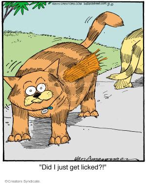 Comic Strip Jerry Van Amerongen  Ballard Street 2015-03-10 cat fur