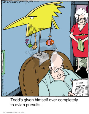 Todds given himself over completely to avian pursuits.