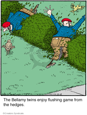The Bellamy twins enjoy flushing game from the hedges.