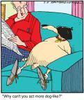 Comic Strip Jerry Van Amerongen  Ballard Street 2011-03-18 hat