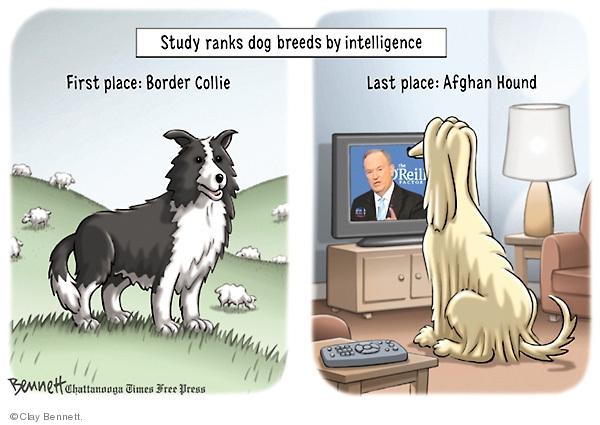 Clay Bennett  Clay Bennett's Editorial Cartoons 2009-02-24 journalist