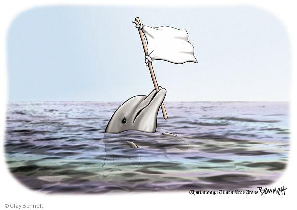 No caption. (A dolphin floats in oily water holding a white flag of surrender).