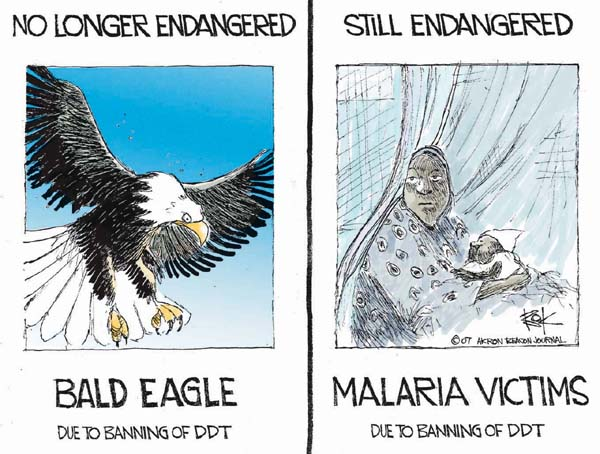 No longer endangered.  Bald Eagle.  Due to banning of DDT.  Still endangered. Malaria victims.  Due to banning of DDT.
