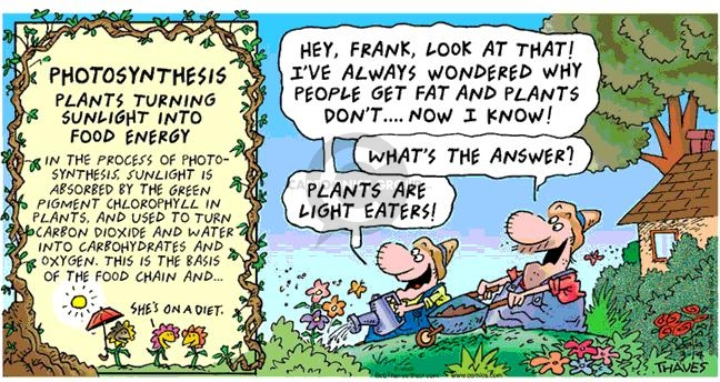Comic Strip Bob Thaves Tom Thaves  Frank and Ernest 2004-03-14 plant