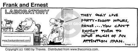 Comic Strip Bob Thaves Tom Thaves  Frank and Ernest 1980-03-07 attention span
