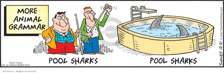 More Animal Grammar.  Pool sharks.  Pool sharks.