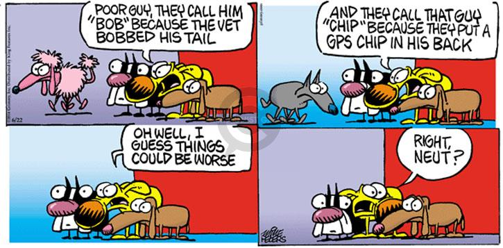 "Poor guy, they call him ""Bob"" because the vet bobbed his tail. And they call that guy ""Chip"" because they put a GPS chip in his back. Oh, well, I guess things could be worse. Right, Neut?"