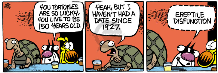 You tortoises are so lucky, you live to be 150 years old. Yeah, but I havent had a date since 1927. Ereptile disfunction.