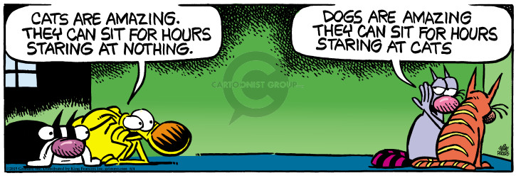 Comic Strip Mike Peters  Mother Goose and Grimm 2015-08-04 dog and cat
