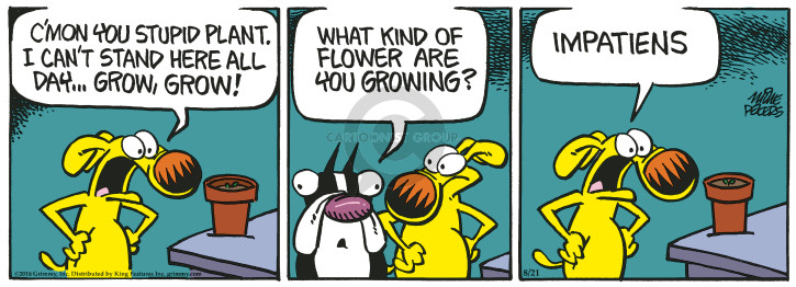 Cartoonist Mike Peters  Mother Goose and Grimm 2018-08-21 flower