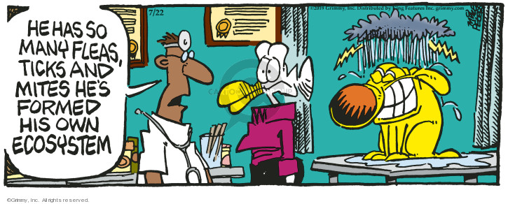 Comic Strip Mike Peters  Mother Goose and Grimm 2019-07-22 form