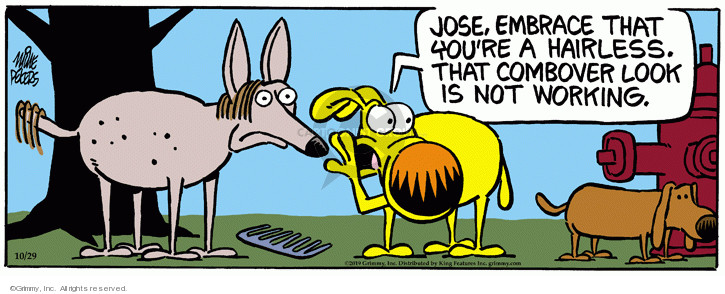 Comic Strip Mike Peters  Mother Goose and Grimm 2019-10-29 hairstyle