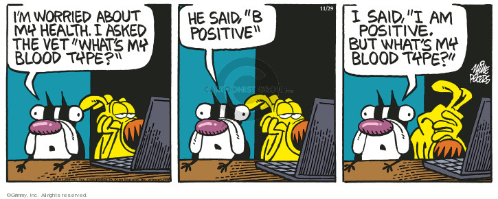 Comic Strip Mike Peters  Mother Goose and Grimm 2019-11-29 veterinarian