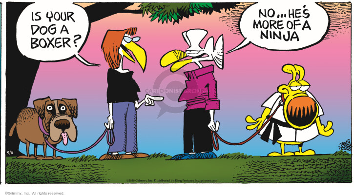 Comic Strip Mike Peters  Mother Goose and Grimm 2020-09-06 strip