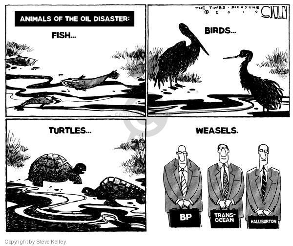 Steve Kelley  Steve Kelley's Editorial Cartoons 2010-05-26 environment