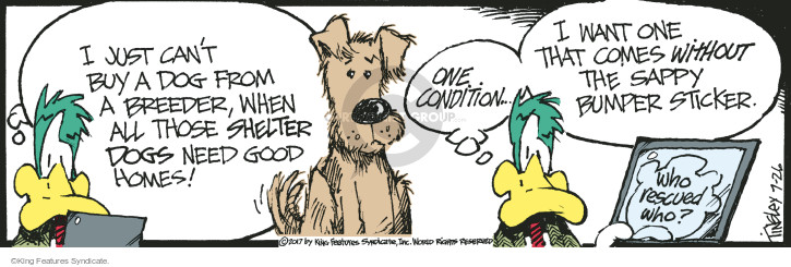 I just cant buy a dog from a breeder, when all those shelter dogs need good home! One condition … I want one that comes without the sappy bumper sticker. Who rescued who?
