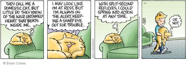 Comic Strip Brian Crane  Pickles 2012-03-05 indoor cat