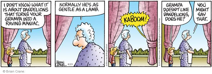 I don't know what it is about dandelions that turns your grandpa into a raving maniac. Normally hes as gentle as a lamb. KABOOM! Grampa doesn't like dandelions, does he? You might say that.