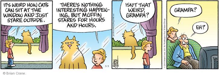 Comic Strip Brian Crane  Pickles 2014-05-03 outdoor cat