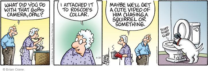 Comic Strip Brian Crane  Pickles 2014-06-20 recording