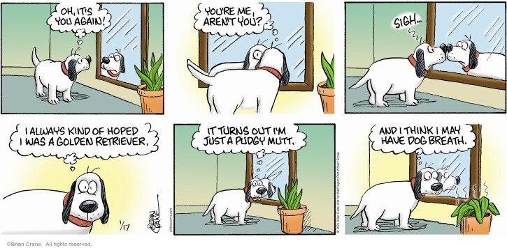 Comic Strip Brian Crane  Pickles 2021-01-17 dog