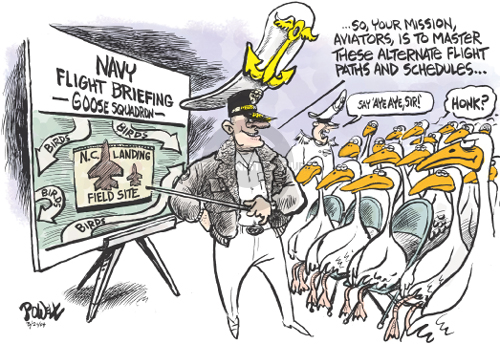 Navy Flight Briefing.  Goose Squadron.  N.C. Landing Field Site.  Birds.  Birds.  Birds.  Birds.  So, your mission, aviators…..