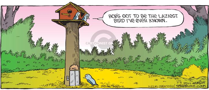 Comic Strip Dave Coverly  Speed Bump 2011-07-03 get