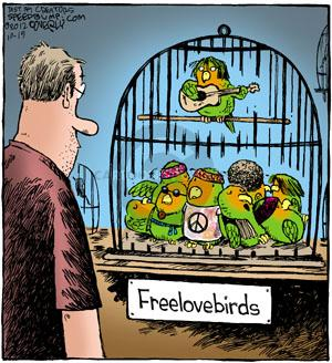 Freelovebirds.