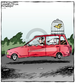 No caption. (A man drives a car with a dog in the back seat. The dogs head is hanging out the window. There is a birdcage strapped to the top of the vehicle and the bird inside the cage is flying in the wind).