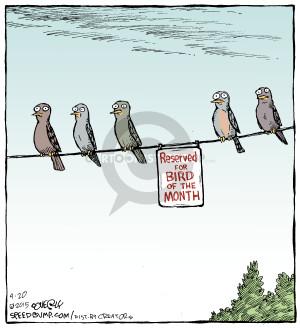 Comic Strip Dave Coverly  Speed Bump 2015-04-20 bird