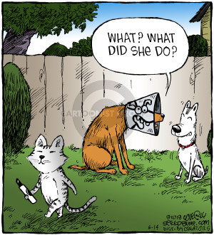 Comic Strip Dave Coverly  Speed Bump 2018-06-14 animal