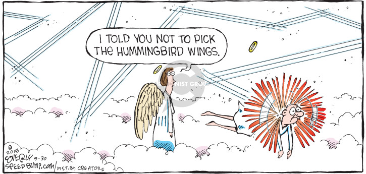 I told you not to pick the hummingbird wings.