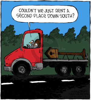 Comic Strip Dave Coverly  Speed Bump 2018-11-22 house