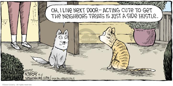 Comic Strip Dave Coverly  Speed Bump 2020-09-06 cat