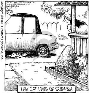 Comic Strip Dave Coverly  Speed Bump 2003-08-18 conceal