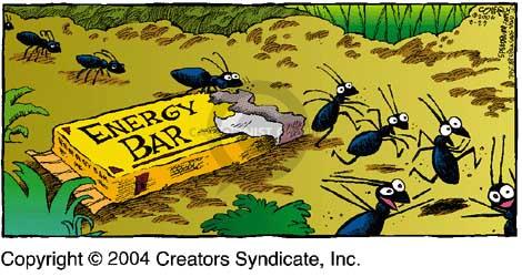 Comic Strip Dave Coverly  Speed Bump 2004-08-29 nourish