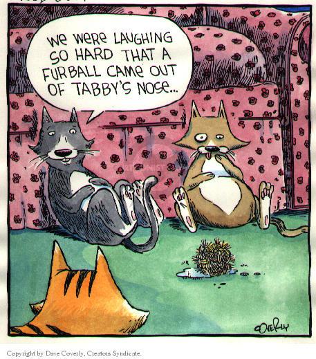 Comic Strip Dave Coverly  Speed Bump 2002-00-00 cat nose
