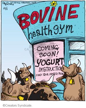 Bovine Health Gym. Coming soon! Yogurt instruction. Find true inner peace.