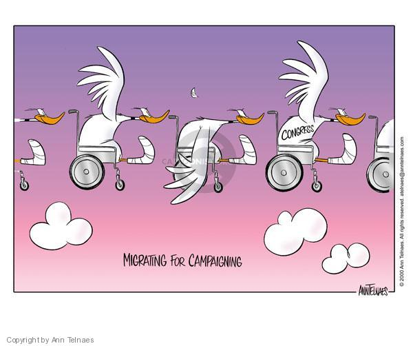 Migrating for campaigning.  Congress.