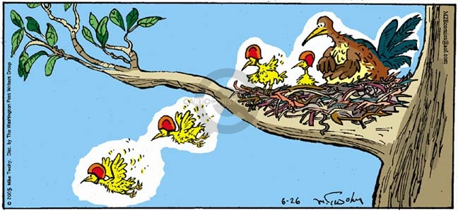 No caption.  (Parent bird watches anxiously as baby birds fly out of nest.  Baby birds wear helmets.)
